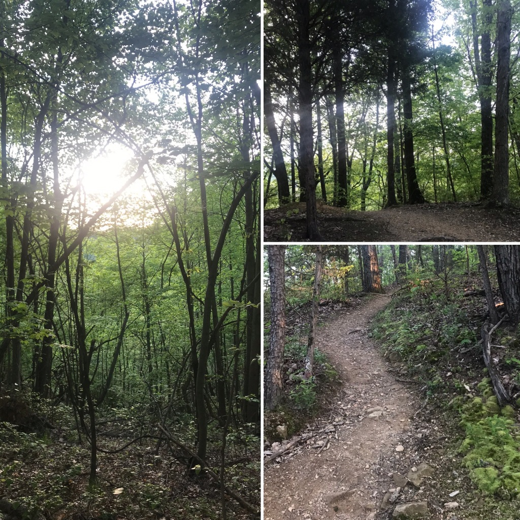 Three sections of forest trail